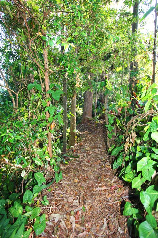 Path through a rainforest area